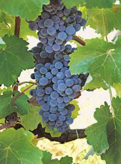 Discover Cretan wines – Tasting -Degustation